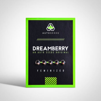 dreamberry autoflower seeds