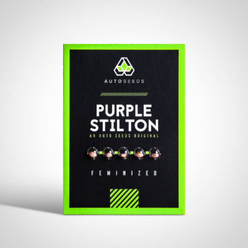 Purple Stilton Seeds
