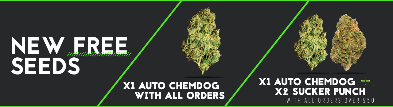 new free seeds by Auto Seeds