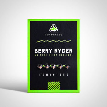 Berry Rider Seeds