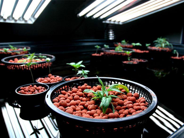 Hydroponic grow room
